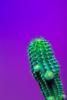 Galeria sztuki projektowanie mody. minimalna stillife. modny jasny kolorowy. koncepcja na różowym tle neon