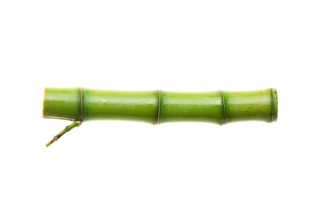 Gałęzie bambusa na białym tle