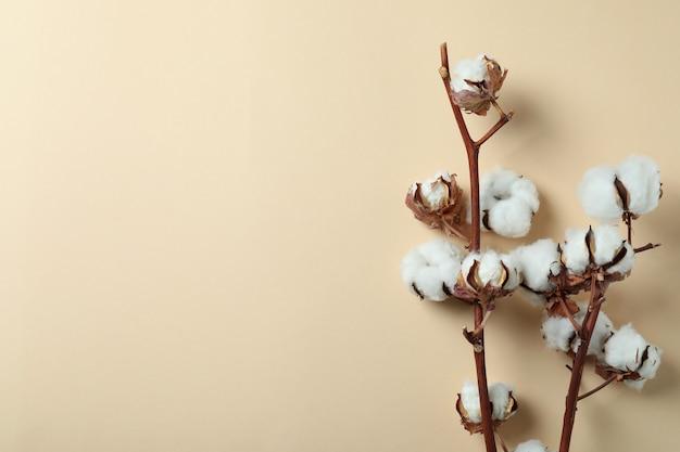 Gałęzie bawełny na beżowym tle