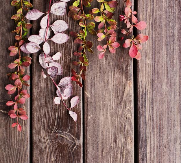 Gałęzie berberysu na starym drewnianym tle
