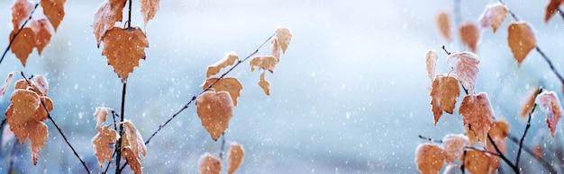 Gałęzie brzozy z suchymi liśćmi podczas opadów śniegu, zimowe tło, panorama
