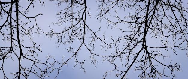 Gałęzie drzew bez liści na tle szaroniebieskiego nieba