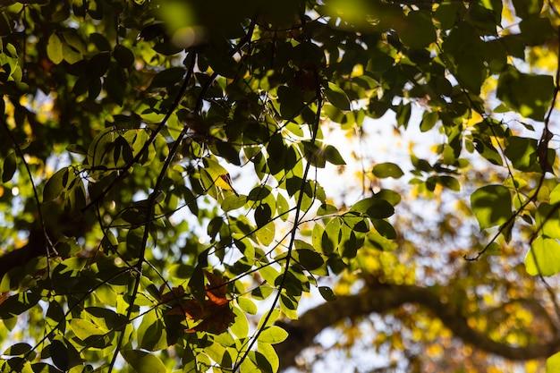 Gałęzie drzew i liście w lesie