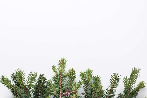 Gałęzie drzew ir
