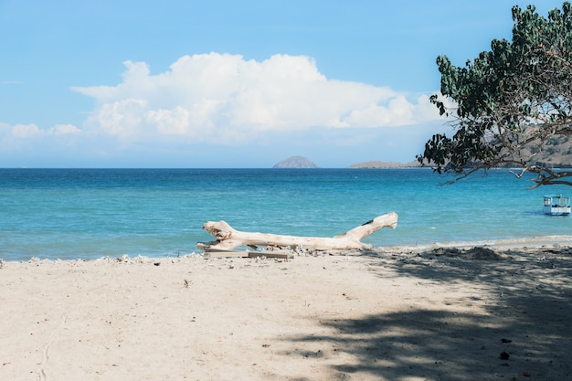 Gałęzie drzew opuszczone na białej, piaszczystej plaży?