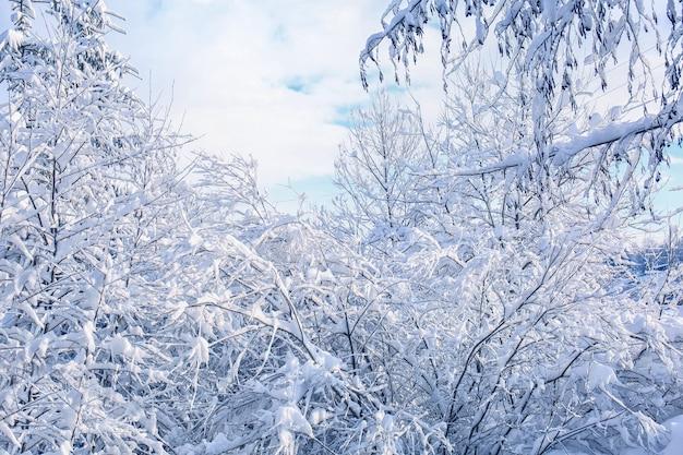Gałęzie drzew pokryte śniegiem w zimowy dzień