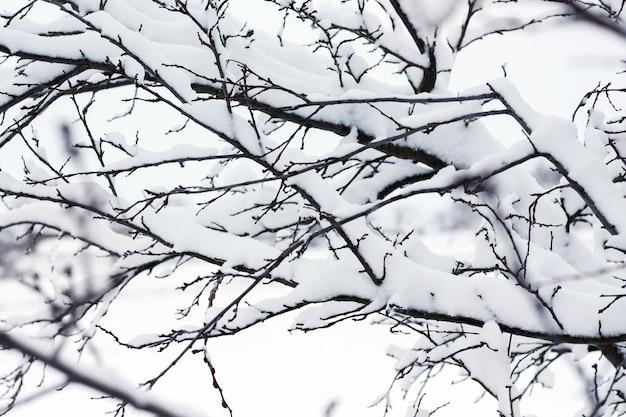 Gałęzie drzewa pod grubą pokrywą śnieżną_