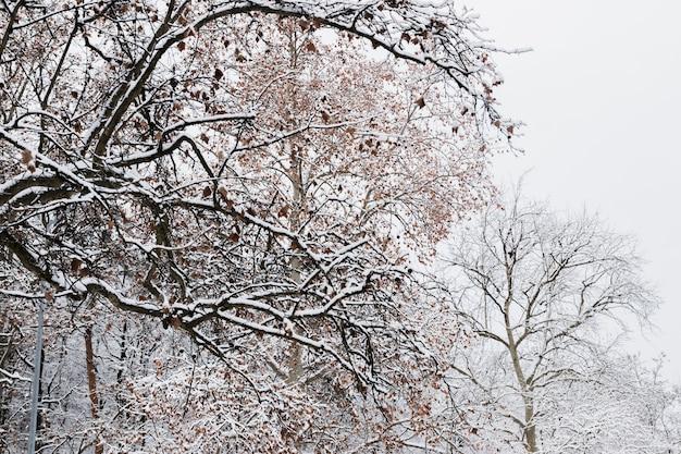 Gałęzie drzewa pokryte śniegiem