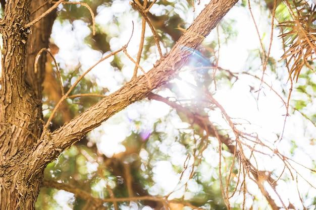 Gałęzie drzewa w słoneczny dzień
