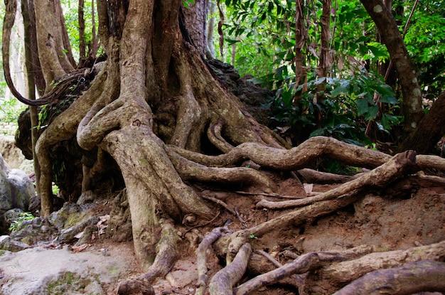 Gałęzie drzewa w ziemi