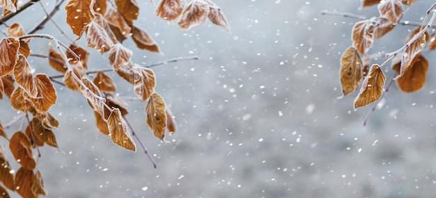 Gałęzie drzewa z suchymi liśćmi na rozmytym tle podczas opadów śniegu