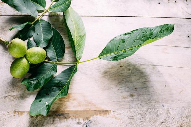 Gałęzie i liście orzecha włoskiego na drewnianym tle. skopiuj miejsce.