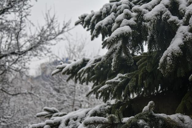 Gałęzie jadły w białym śniegu