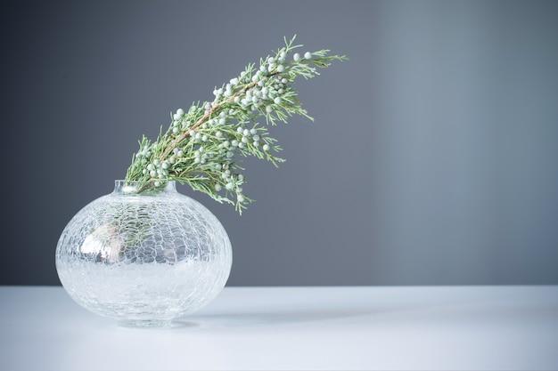 Gałęzie jałowca w szklanym wazonie na szarym tle