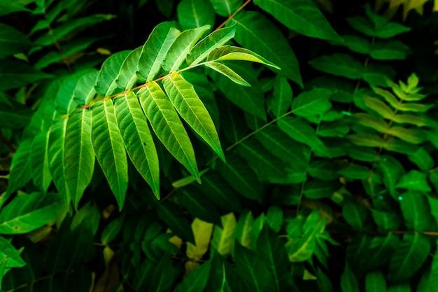 Gałęzie krzaków z dzikimi zielonymi liśćmi w gęstym lesie.