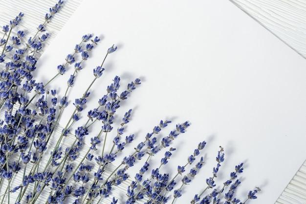 Gałęzie kwiatów lawendy