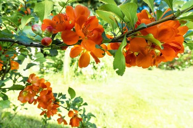 Gałęzie kwitnących roślin kwitnących na naturalnym rozmytym tle