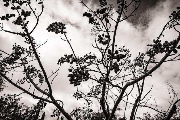 Gałęzie na tle nieba w czerni i bieli