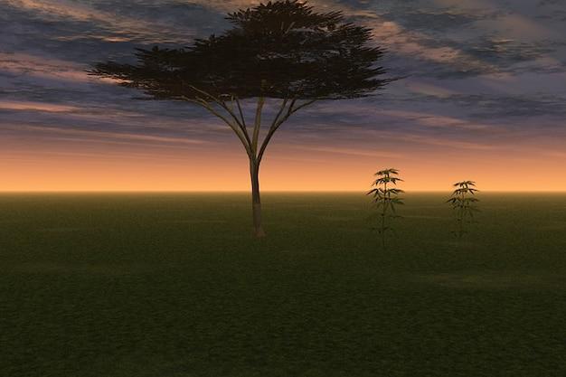 Gałęzie nocne niebo wieczorne