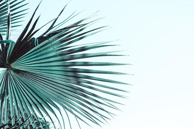 Gałęzie palmy pod słońcem niebo stonowane w neo miętowym kolorze roku 2020. tło roślin z jasnym słońcem i przestrzenią do kopiowania