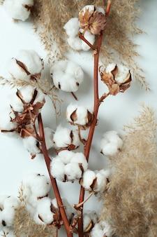 Gałęzie roślin bawełny i trzciny na białym tle