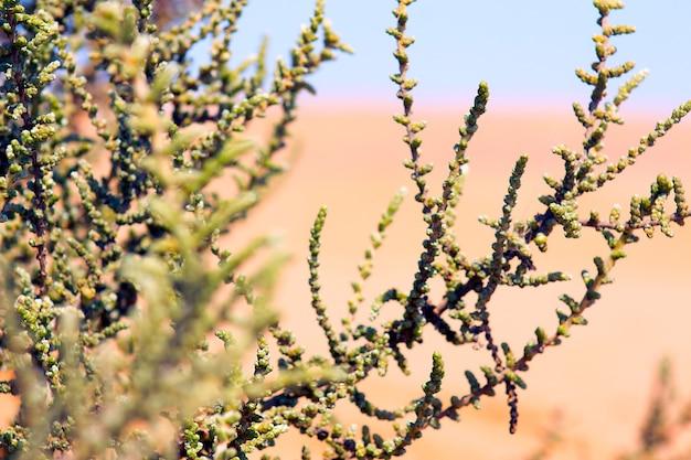 Gałęzie roślin na afrykańskiej pustyni