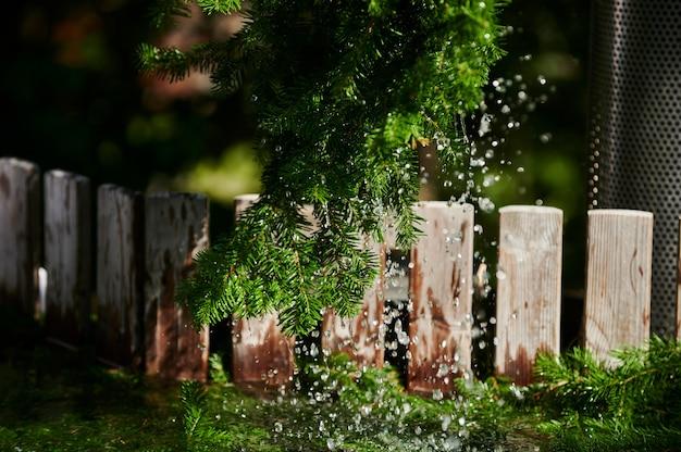 Gałęzie sosny w pobliżu gorącego drzewa iglastego w wodzie z gorącej rurki spa