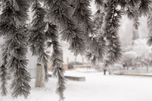 Gałęzie w mrozie i śniegu w zimie. zamarznięte drzewo, koncepcja mrozu, tymczasowe, zima, zimno