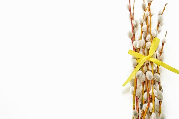 Gałęzie wierzby cipki na białym tle