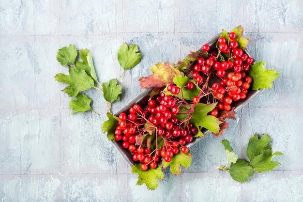 Gałęzie z dojrzałymi jagodami kaliny i liśćmi na podłożu na stole. wellness, medycyna alternatywna i odżywianie witaminami. widok z góry. skopiuj miejsce