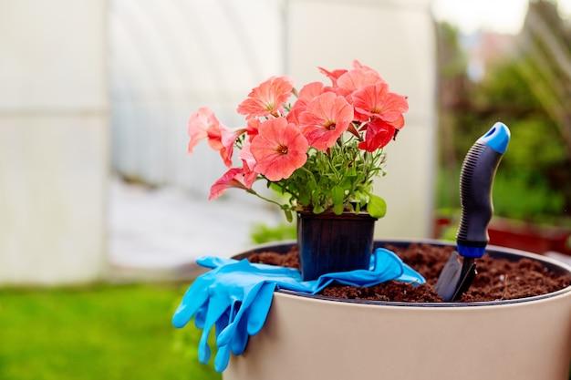 Garnek pięknych jasnych kwiatów, rękawiczek i łopaty stoi w dużym ceramicznym wazonie w ogrodzie