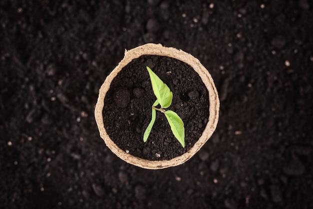 Garnek z młodą rośliną na ziemi