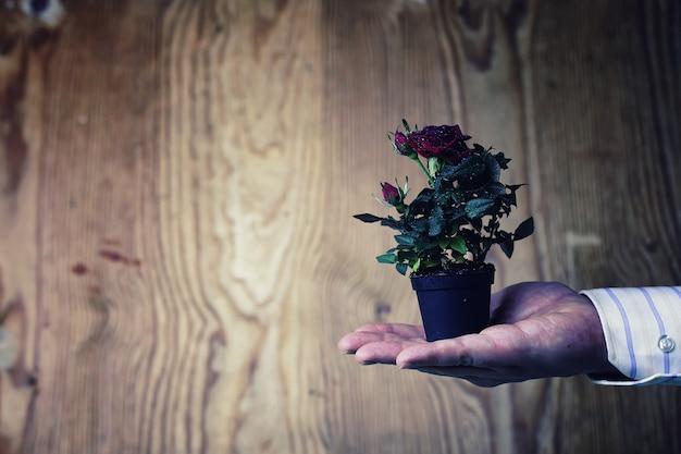 Garnek z różą w tle garnituru ręki mężczyzny