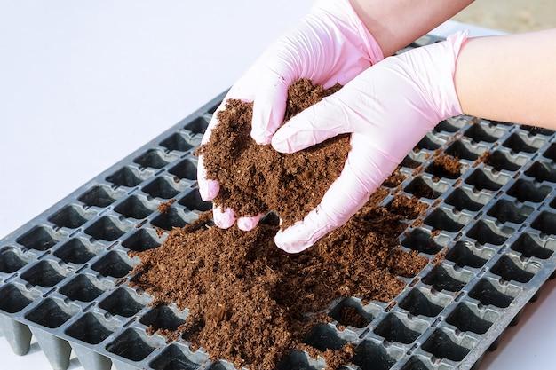 Garść urodzajnej ziemi w rękach rolnika. wysiew nasion. rosnące sadzonki.