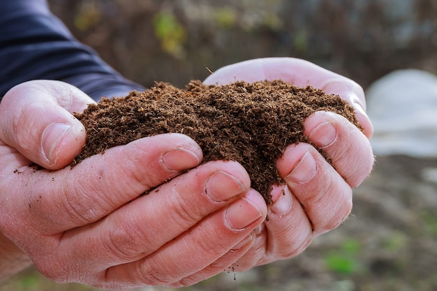Garść urodzajnej ziemi w rękach rolnika. wysiew nasion. uprawa sadzonek.