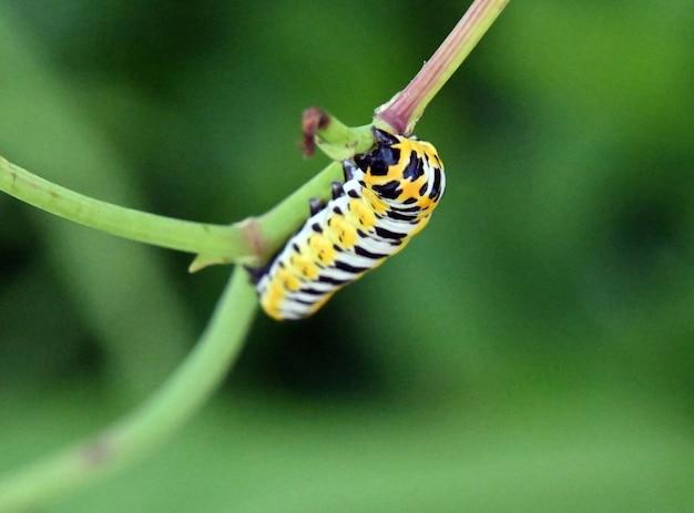Gąsienica na trawie
