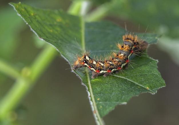 Gąsienica na zielonym liściu