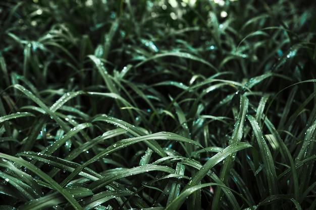 Gąszcz ciemnej mokrej trawy