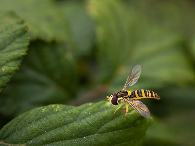 Gatunki much fotografowane w ich naturalnym środowisku