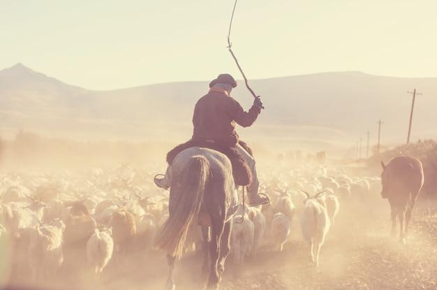 Gauchos i stado kóz w górach patagonii, argentyna