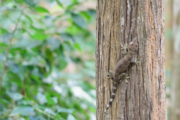 Gekon siedzący na drzewie