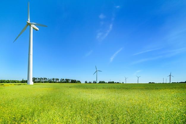 Generator wiatrowy na łąkach