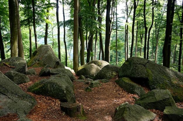 Geo park felsenmeer (morze kamieni), niemcy.