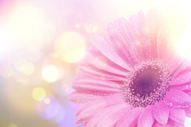 Gerbera daisy obraz z rocznika retro efekt