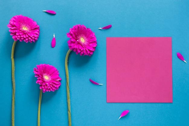 Gerbera kwiaty i różowy kawałek papieru kopia przestrzeń