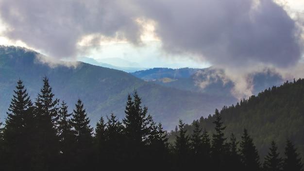 Gęsta chmura na szczycie góry. krajobraz z drzewami w górach