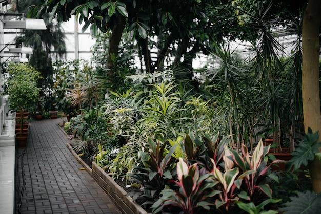 Gęste zarośla roślin w szklarni. jungle, wygaszacz ekranu