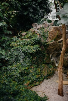 Gęste zarośla roślin w szklarni. jungle, wygaszacz ekranu.