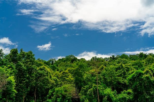 Gęste zielone drzewo w lesie z błękitnym niebem i białymi chmurami