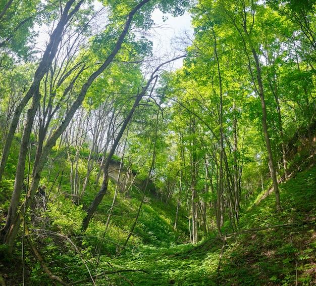 Gęsty las w wąwozie między wzgórzami w centralnej rosji